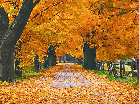 Aprovecha el otoño para soltar lo inútil