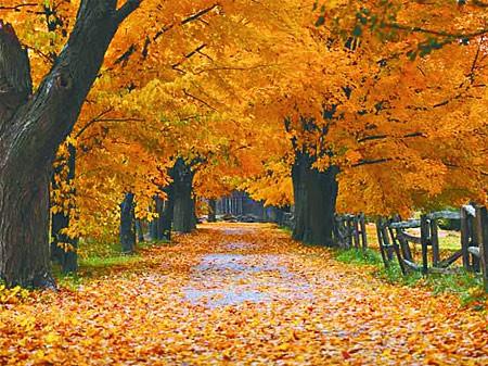 Nutze den Herbst um dich von Überflüssigem zu trennen